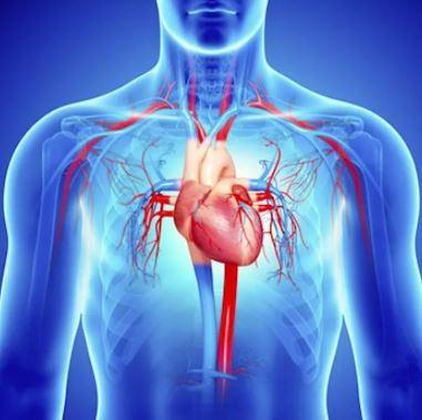 radiografía de un corazón sano