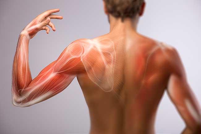 cómo hacer los músculos